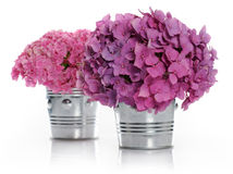 Vases with bouquets of hydrangea Royalty Free Stock Images