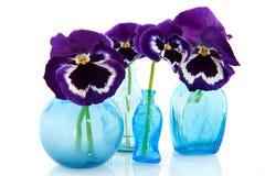 Vases en verre bleus avec des pensées Photographie stock libre de droits