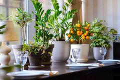 Vases with flowers in restaurant served table Royalty Free Stock Image