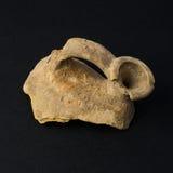 Vasi antichi Immagine Stock