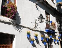 Vasi blu con i fiori Fotografia Stock