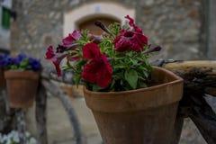 Vasi che appendono sulla parete con i fiori nella città di Valldemosa Fotografie Stock