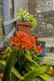 Vasi che appendono sulla parete con i fiori nella città di Valldemosa Fotografia Stock