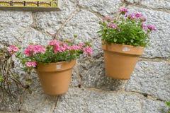 Vasi che appendono sulla parete con i fiori nella città di Valldemosa Immagine Stock