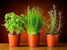 Vasi con le erbe fresche Fotografia Stock