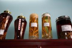 Vasi con medicina cinese Fotografia Stock