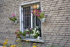 Vasi da fiori Fotografia Stock Libera da Diritti