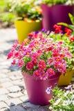 Vasi da fiori Immagini Stock