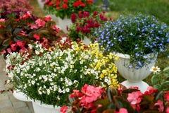 Vasi da fiori bianchi con i fiori all'aperto La decorazione del giardino, delle verande e dei terrazzi Fiori in blu, rosso, bianc Fotografie Stock Libere da Diritti