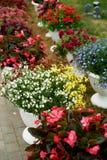 Vasi da fiori bianchi con i fiori all'aperto La decorazione del giardino, delle verande e dei terrazzi Fiori in blu, rosso, bianc Fotografia Stock Libera da Diritti