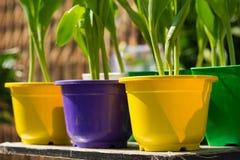 Vasi da fiori brillanti uColorful dei vasi da fiori brillanti variopinti sotto il primo piano di luce solare del closeupnder di l Fotografie Stock Libere da Diritti