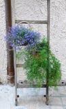 Vasi da fiori che pendono da una scala di legno Fotografie Stock