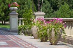 Vasi da fiori con fiori Fotografia Stock
