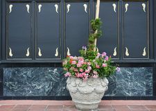 Vasi da fiori con i fiori di colore pieno Immagine Stock