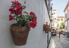 Vasi da fiori con i fiori rossi in una via tipica di Siviglia, Andalusia, Spagna Fotografia Stock Libera da Diritti