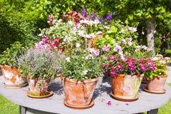 Vasi da fiori d'annata con i fiori Immagine Stock