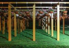 Vasi da fiori d'attaccatura. L'illuminazione di sera. immagini stock