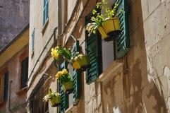 Vasi da fiori di Narcis in finestre in Palma Mallorca fotografie stock
