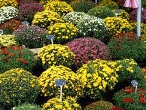 Vasi da fiori di tutti i colori fotografia stock libera da diritti