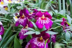 Vasi da fiori differenti in una serra Fotografie Stock