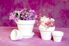 Vasi da fiori e fiori miniatura Immagini Stock Libere da Diritti