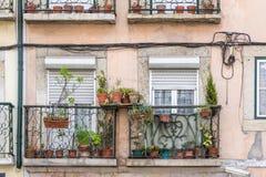 Vasi da fiori e piante della casa su un balcone Immagine Stock Libera da Diritti