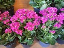 Vasi da fiori su esposizione fotografia stock