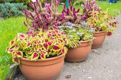 Vasi dei fiori variopinti e delle piante Fotografia Stock Libera da Diritti