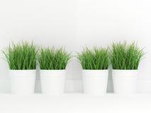 Vasi dell'erba verde Fotografie Stock