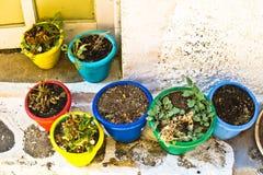 Vasi della pianta Fotografia Stock Libera da Diritti