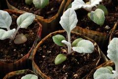 Vasi della pianta del giornale Immagini Stock