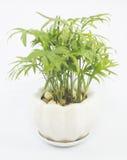 Vasi della pianta messi nella casa Immagini Stock Libere da Diritti