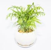 Vasi della pianta messi nella casa Fotografia Stock