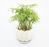 Vasi della pianta messi nella casa Fotografia Stock Libera da Diritti