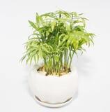 Vasi della pianta messi nella casa Fotografie Stock