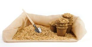 Vasi della torba con i semi dell'avena e poca cazzuola di giardinaggio Fotografia Stock