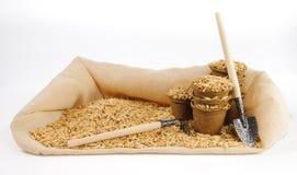 Vasi della torba con i semi dell'avena e pochi cazzuola e rastrello di giardinaggio Immagine Stock