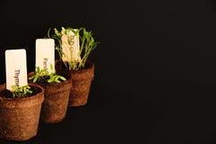Vasi della torba delle piantine su un fondo nero Fotografie Stock