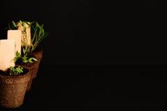 Vasi della torba delle piantine su un fondo nero Immagine Stock Libera da Diritti