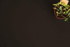 Vasi della torba delle piantine su un fondo nero Fotografia Stock