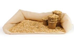 Vasi della torba riempiti di semi dell'avena Immagine Stock Libera da Diritti