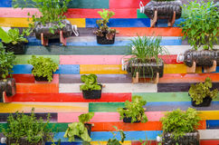 Vasi delle erbe della pianta che appendono sulla parete Immagini Stock