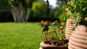 Vasi di argilla su erba verde fotografie stock libere da diritti