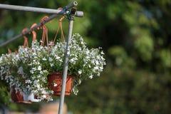 Vasi di fiore variopinti che appendono nella regolazione della campagna Immagini Stock Libere da Diritti