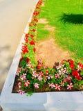 Vasi di fiori davanti alla casa Fotografia Stock