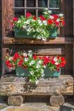 Vasi di fiori della petunia sulla finestra di una cabina di ceppo rustica di legno nelle alpi, la valle d'Aosta Italia Immagine Stock