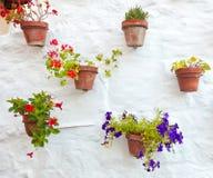 Vasi di terracotta con i fiori variopinti che appendono sulla parete bianca Fotografia Stock Libera da Diritti