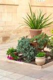 Vasi floreali con i succulenti all'aperto un giorno soleggiato Fotografia Stock Libera da Diritti