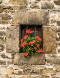 Vasi nella finestra Fotografia Stock
