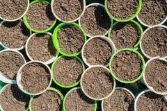 Vasi per la piantatura delle piantine del pomodoro Immagini Stock Libere da Diritti